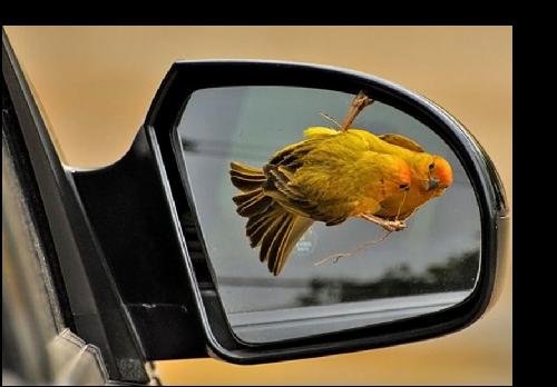 Oiseau retro